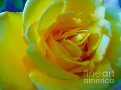 Photograph by Tracey Lee Everington (Tracey Lee Art Designs) Landscape Artwork, Colorful Artwork, Framed Prints, Canvas Prints, Yellow Roses, Fractals, Fine Art America, Greeting Cards, Tapestry