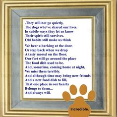 For Shadow- My golden, my brother, and he will always be my best friend. We don't forget our old friends.