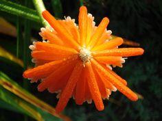 orange exotic flower