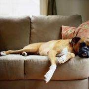 The absorbent upholstery on couches makes them targets for persistent odors. However, you can combat odors with common household products. Keep couches clean, and vacuum them weekly to get rid of odor-causing substances. Put a blanket or washable slipcover on the couch if you have a pet or children that aggravate the problem.