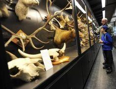 Beaty Biodiversity Museum at UBC