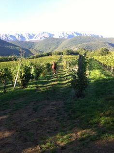 TASTE THE WINE. I vini del cuore dell'Abruzzo ai Salotti del Gusto dell'Alta Badia. Grazie all'azienda VIGNA DI MORE