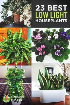 Indoor Vegetable Gardening Low Light Houseplants - Growing indoor plant is the best way to transform any house into a home. Here's the list of 23 low-light houseplants that are easy to keep alive. Indoor Plants Low Light, Best Indoor Plants, Outdoor Plants, Outdoor Landscaping, Low Light Houseplants, Indoor Shade Plants, Low Light Succulents, Outdoor Privacy, Hanging Plants