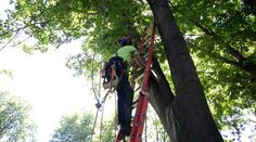 When Do You Need to Hire a Professional Arborist? #arborist #treeremoval