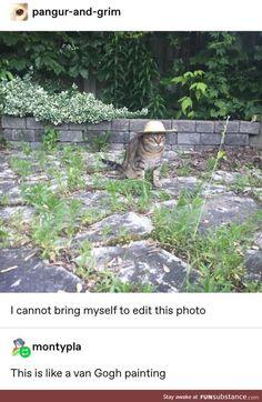 Van Gogh would be proud - Fun - Katzen Cute Funny Animals, Funny Cute, Cute Cats, Hilarious, Van Gogh, Cat Memes, Funny Memes, Izu, Animal Memes