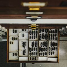 @jnsilva snaps a behind-the-scenes shot in the Museum's Invertebrate Zoology collections area. #InsideAMNH