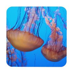 #beauty - #Beautiful Jellyfish Coasters
