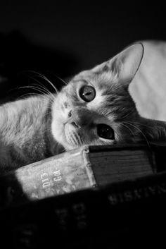 rebloggy.com post cat-animals-black-and-white-book-animal-livro-photos-preto-e-branco-gato 71222106692