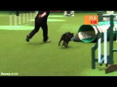 Dog Poops Mid-Competition