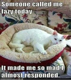 Funny Animal Pictures 27 Pics