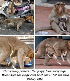 Maternal instincts are not for any one species