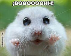Hamster asustando.