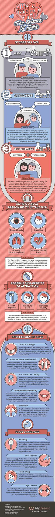 infographic describing the science behind falling in love