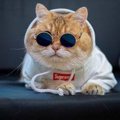 Cute Baby Cats, Cute Kittens, Cute Funny Animals, Cute Baby Animals, Cats And Kittens, Funny Cats, Siamese Cats, Cat Phone Wallpaper, Funny Cat Wallpaper