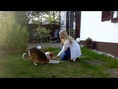 Hallöchen ihr Lieben♥ Kaya und ich haben uns die letzten Tage damit beschäftigt ihr einen neuen Trick beizubringen - Verbeugen. Dabei beugt sich der Hund mit den Vorderpfoten und dem Kopf nach unten während die Hinterbeine aufrecht stehen bleiben. Diese Pose kann man auch beobachten, wenn Hunde sich gegenseitig zum Spielen auffordern. Doch wie bringt…