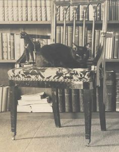 Bambino Mark Twain's cat