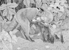 FOX & CUB,  Fran Meredith Clive (Clive Meredith)