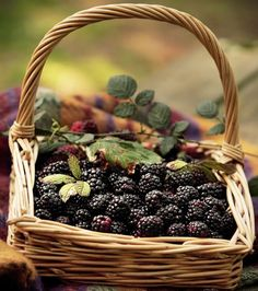 seasonalwonderment:  Blackberries