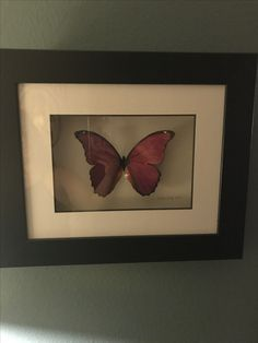 Blair this is one of my favorite art show collection pieces. It's by an artist who recreates & mounts butterflies to look like the real thing, they're all unique & beautiful. The artist's name is  Isabeau Ivory. I have a special love for butterflies! 🦋🦋🦋