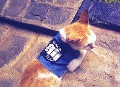 """<b>Punk's not dead, but it is VERY cute.</b> Get more punk warm fuzzies over at <a href=""""http://go.redirectingat.com?id=74679X1524629&sref=https%3A%2F%2Fwww.buzzfeed.com%2Fsummeranne%2Fpunk-is-sweet&url=http%3A%2F%2Fnicepunks.tumblr.com%2F&xcust=3283981%7CBFLITE&xs=1"""" target=""""_blank"""">Nice Punks</a>."""