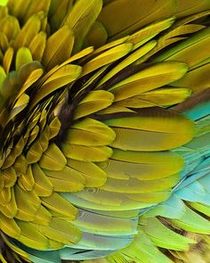 merde-petit-maitre:    Photography  (Macaw feathers, via wasbella102)