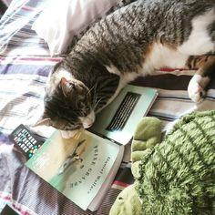 Tudo bem eu não queria continuar lendo mesmo.  #totoro #totorosan #gato #cat #instapet #instadog #dog #viralata #adote #adotenaocompre