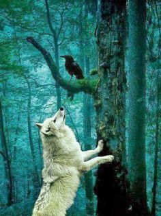 Nevermore Mrs. Inquisitive wolf