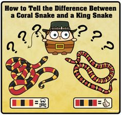 DIFFERENCEINSNAKES