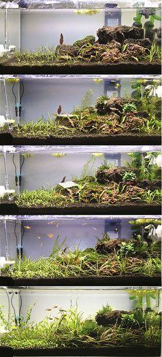 48cm Tank: 2nd Scape   par faizalsamsi@gmail.com . Pin by Aqua Poolkoh