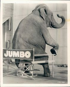 indypendent-thinking:  Syd, star of MGM's Jumbo, 1962 (via http://www.ebay.com/itm/1962-Syd-Elephant-Star-MGMs-Movie-Billy-Roses-Jumbo-Sits-n-Chair-Wire-Photo-/300661789727?pt=Art_Photo_Images&hash=item4600d6d41f#ht_4162wt_1182)