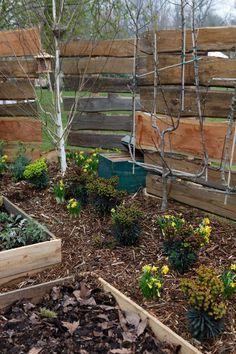 """Pour cultiver vos plantes naturellement, il est conseillé de leur adjoindre du paillage : les morceaux de bois récupérés dans votre jardin peuvent faire l'affaire ! Réalisation """"jardin nature"""" d'O. Bedouelle, Vert Déco."""
