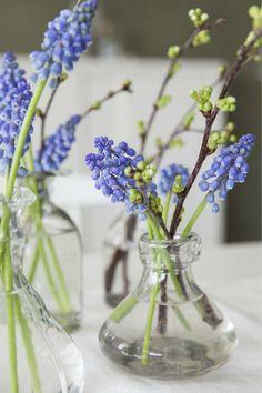 Muscari er søte i små vaser. Fresh Flowers, Spring Flowers, Flower Vases, Flower Art, Vase Arrangements, Spring Time, Flower Power, Planting Flowers, Greenery