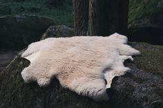 Ataegina || Naturally Handtanned Sheepskin - WILD ANA CROW    #sheepskin #handtanned #sheepskintanning #pelt #wildanacrow Panda Bear, Leather Craft, Crow, Nature, Productivity, Leather Crafts, Naturaleza, Pandas, Raven