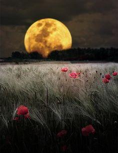 awesome full moonrise