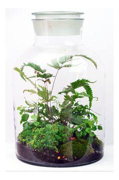 SALE Japanese Garden Terrarium With Miniature Path By DoodleBirdie |  Gardening | Pinterest | Large Glass Jars, Garden Terrarium And Terraria