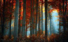 #paisaje, #bosque, #naturaleza