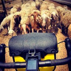 Mejores bicicletas y alforjas para hacer el Camino de Santiago