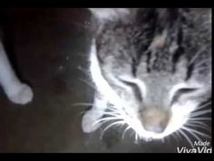 Gatos paranormais, UFO hipnóticos alien Cultural ciência look subscribe to the channel. - YouTube