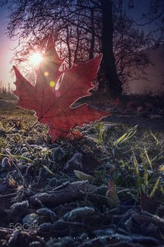 Frosted leaves.. by Makis Bitos.... #trees #leaves #landscape #sunrise #frozen #winter #cold #nature #macro #sun #light #grass #colors