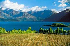 I hope to go wine tasting in New Zealand some day.