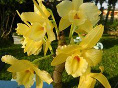 Oi meus amores hoje estou simplesmente romântica vim dá a cada um jardim de flores, e cada flores com seus significados, as vezes compramo...