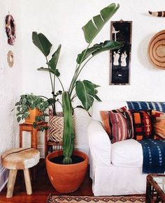 Feng Shui prosperity - Plants, natural lively, fresh flowers.