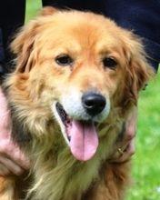 Davy Hund Mischlingshund In Italien Tierheim Tiere Hunde