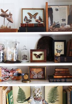 Butterfly collection display via Curious Details