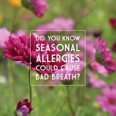 HAY FEVER and allergy medications can dry out your mouth, causing bad breath! Probiotic gum and hydration will help. So while you are taking your pill don't forget to pop in a piece of gum!