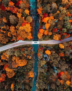 """25.2k aprecieri, 267 comentarii - Huck (@kylefinndempsey) pe Instagram: """"Over the river & through the forest, stopping every 50 feet to snap pics of the foliage."""""""