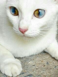 I was born with one blue eye and one brown eye.