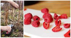 Raspberry, Strawberry, Fruit, Food, Gardening, Halloween, Essen, Lawn And Garden, Strawberry Fruit