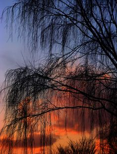 Solace at Sunset by *theblindalley - via: crescentmoon06: - Imgend