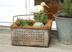 Recycle a dip tin! I have heaps of these Garden Urns, Succulents Garden, Planting Flowers, Planter Boxes, Planters, Planter Ideas, Rustic Gardens, Outdoor Gardens, Garden Inspiration